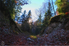 The deep Hofwald forest of Scharnitz